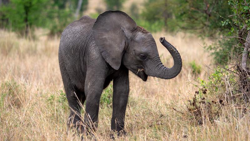 Tanzania-Serengeti-National-Park-Safari-Elephant-04.jpg