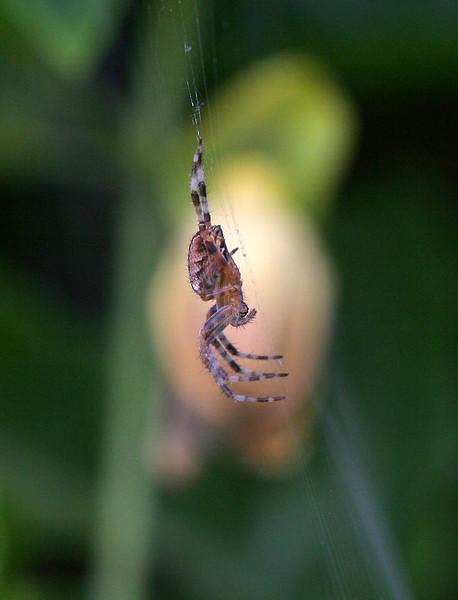 5863 Spider.jpg