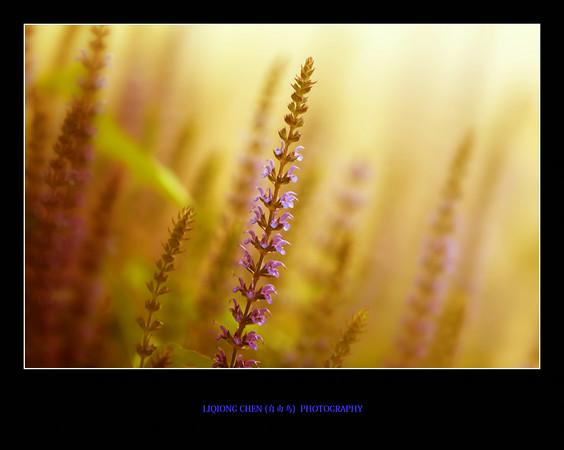 _MG_6951-ps-M.jpg