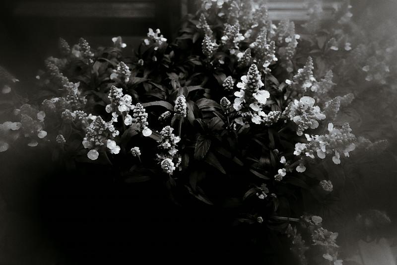 succulents 526--2.jpg