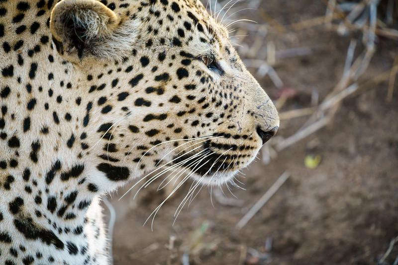 LeopardHills-20171023-1363.jpg