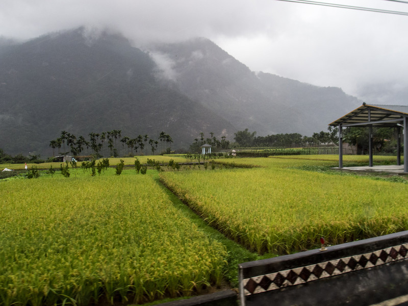 Rice, above Wu Xi