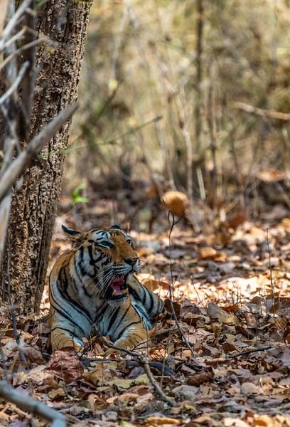 India_April_2019-114.jpg