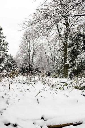 First Snow - Dec 2007
