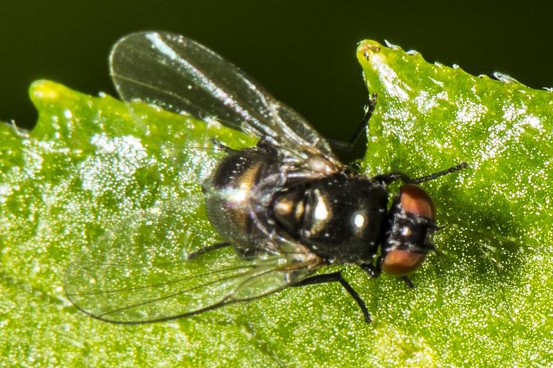 DSC_1753 Small Fly  PS- LL NEF.jpg