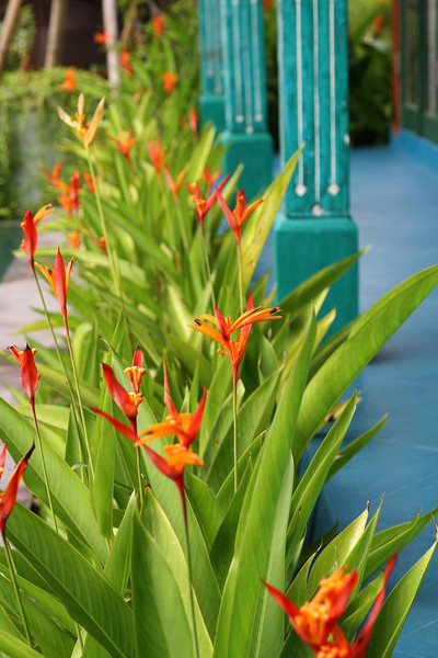 More tropical goodness and incredible color combos