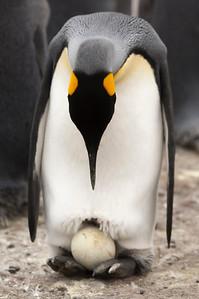 Antarctica Fauna