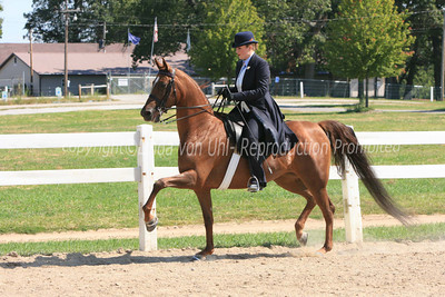 Saturday Saddle Seat Classes