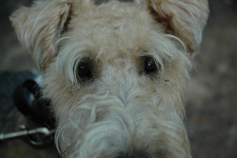 Sad puppy dog eyes.
