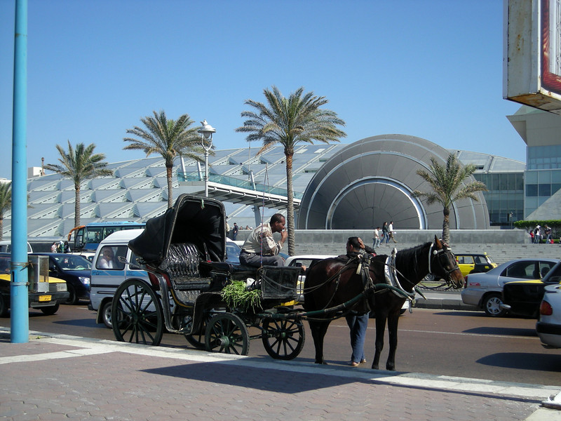 waiting for a rider, Bibliotheca Alexandrina, Egypt