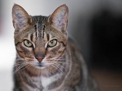 Olsson Cat