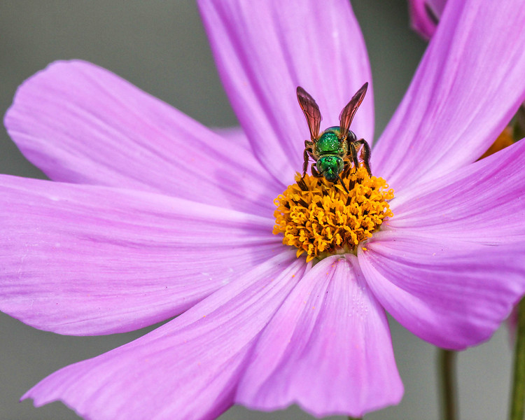 Flower with Green Fly