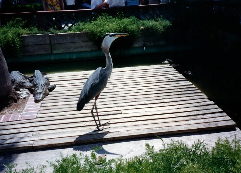 1989_May_Gatorland_Zoo_and_Sea_World_0010_a.jpg