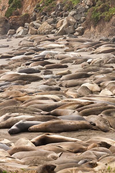 Seals near Hearst Castle