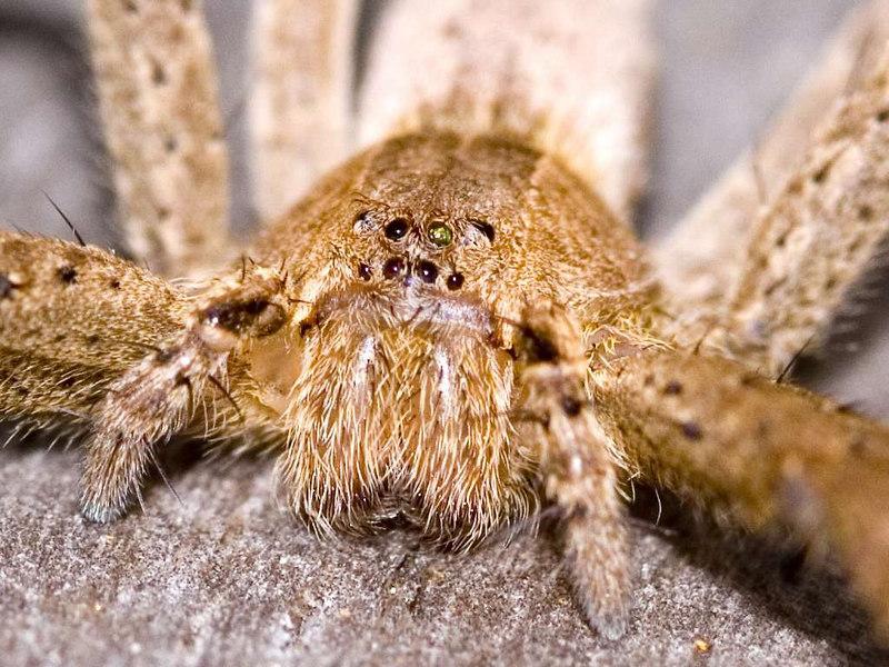 Spider1024.jpg