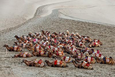 Camels, 鳴沙山,Mingsha Mountain, Gansu, China 2010