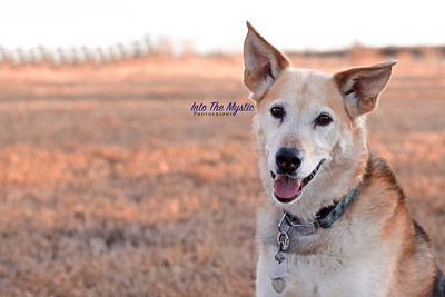 Love Your Pet - Doggy Daycamp near Crossfield Alberta