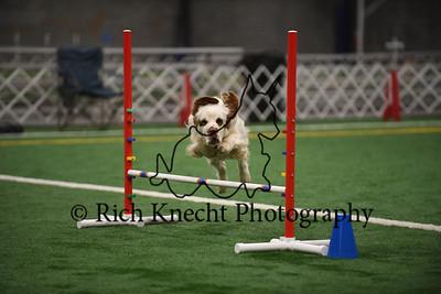 York County Dog Training Club AKC Agility Trial October 12-13
