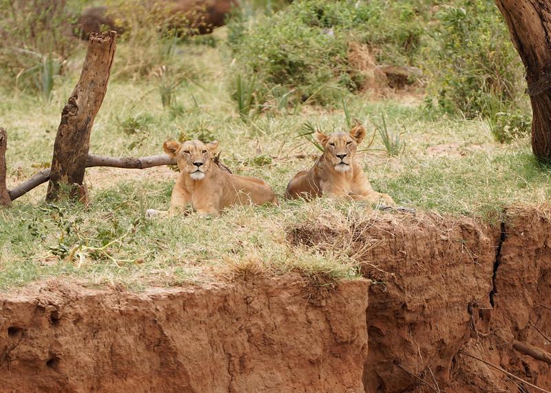 safari-2018-41.jpg