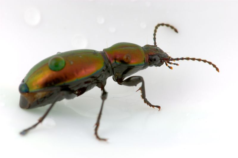 coloredbeetle.jpg