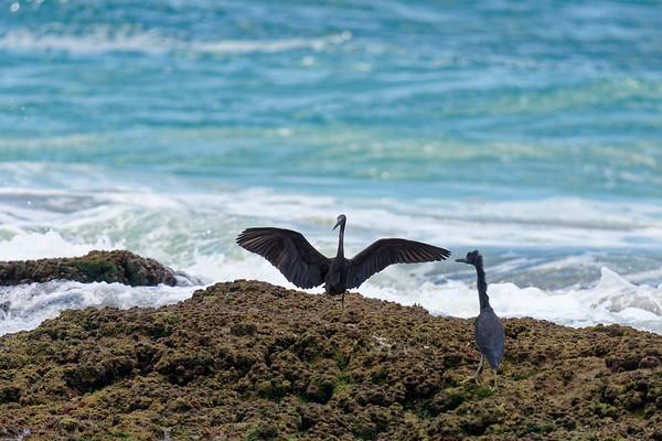 Fraser Island 2019
