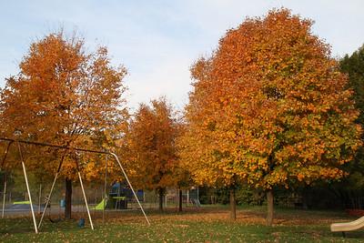 Fall Playing, Foliage, Willing Park, Tamaqua (10-18-2011)