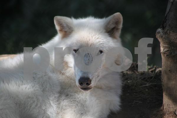New Photos For Nature Center