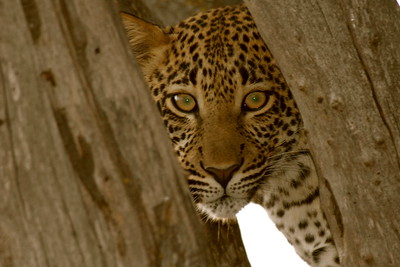 African Wildlife South Africa & Tanzania