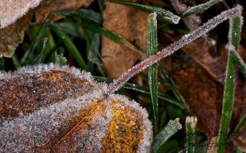 Yard Frost