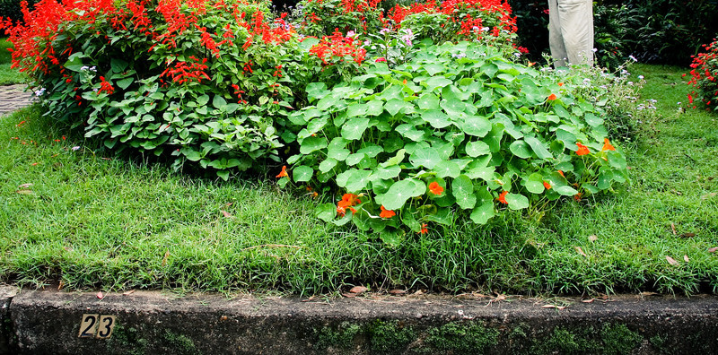 garden (179).jpg