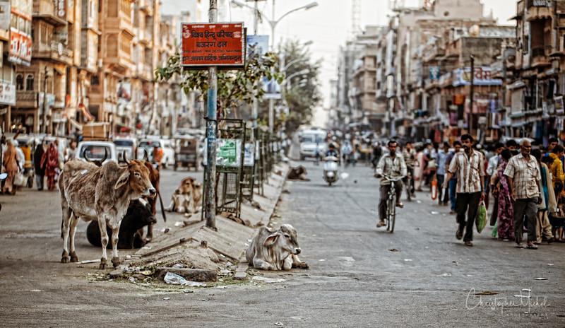 20111110_Jodhpur_8345.jpg