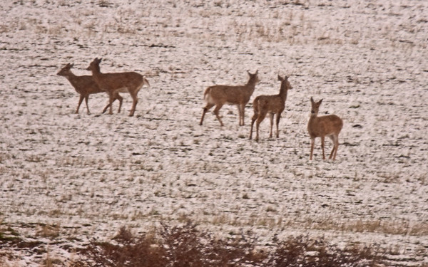 Mill Creek, Scenic Loop Roads for Elk: 1-4-19