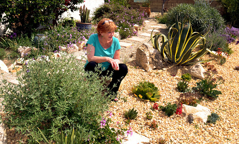 . Last fall, Lorrie Ourada took advantage of LADWP\'s cash for grass rebate by redoing her front yard. Her Porter Ranch front lawn is gone and today her landscape requires much less water.  (Photo by Dean Musgrove/Los Angeles Daily News)