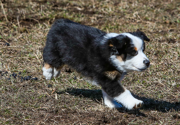 Winky/Onyx Herding Test