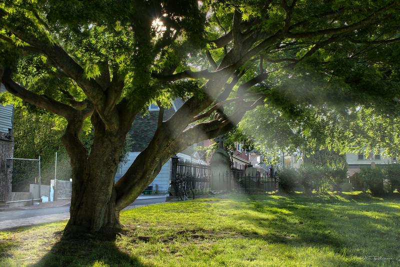 rays-tree.jpg