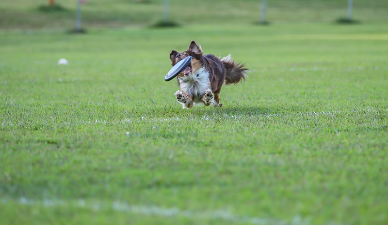 Millersville Toss&Fetch League - 8/27/19