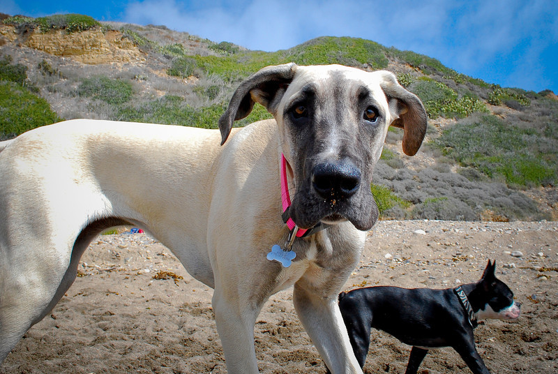 dogs_beach-100.jpg