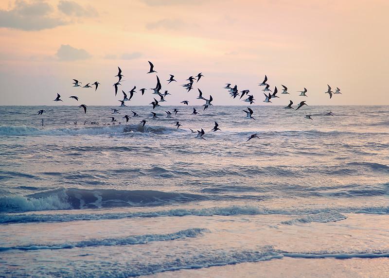 beach birds.jpg