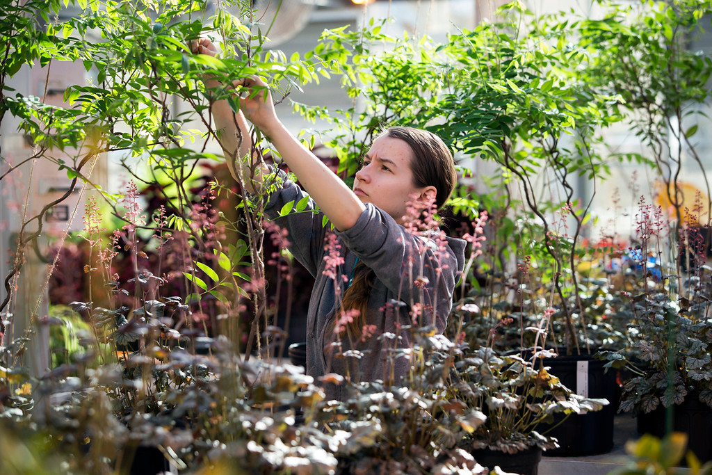 . Horticulture major Nicole Jackson.  photo by Betsy Manning