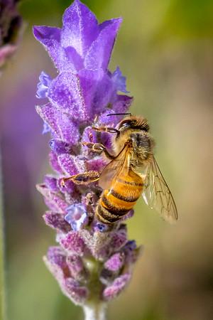 Bees, December 2014, 7Dll