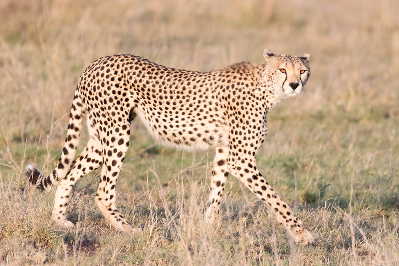 Africa - 101616 - 4876.jpg