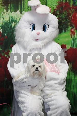 X-ta-C Dog  Easter Fund Raiser