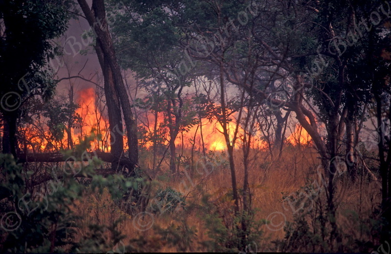 שריפת יער.jpg