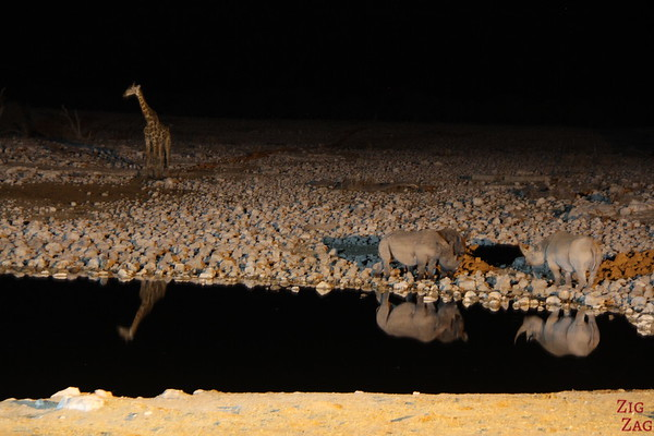 Giraffe at night in Etosha National park , Namibia 2