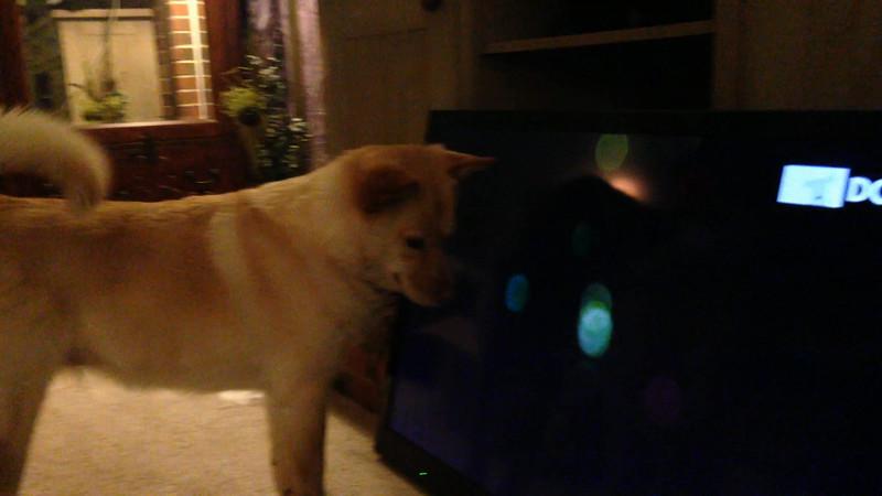 Fox and DogTV 4