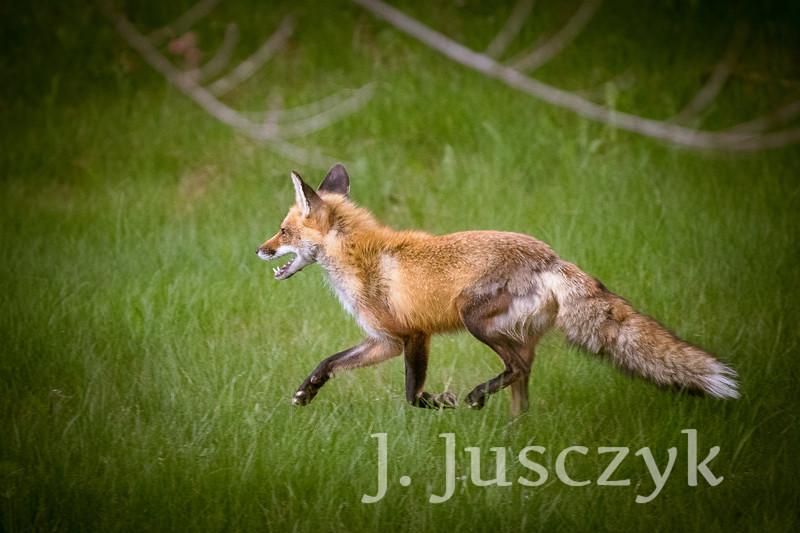 Jusczyk2021-6180.jpg
