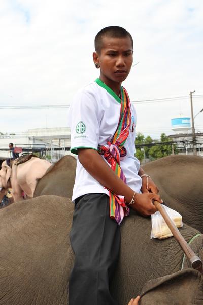 2014-11-14 Surin Elephant Welcome Feast 844.JPG