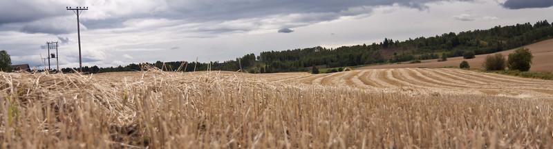 Høst2010-116