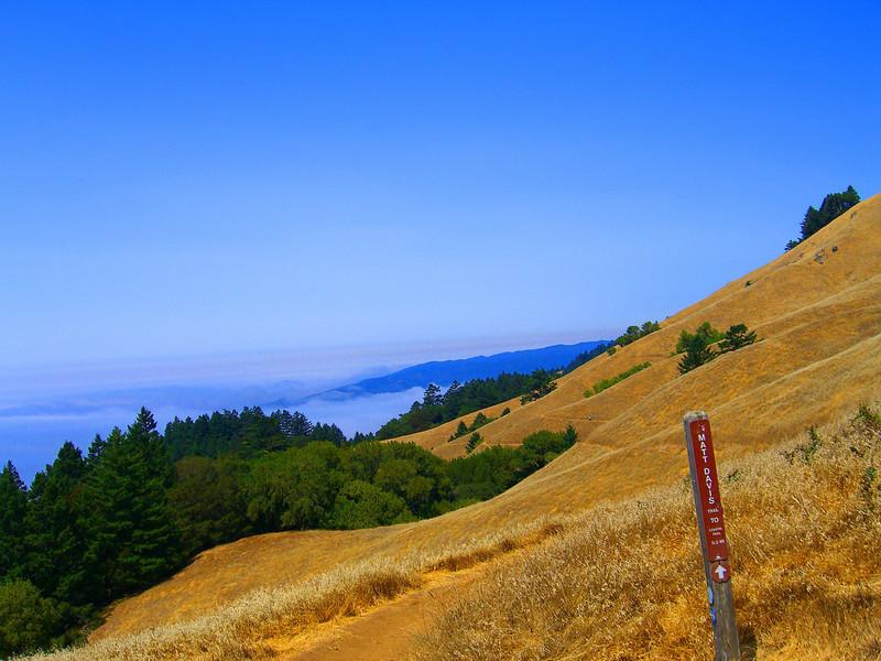 Matt Davis trail, Mt. Tamalpais State Park, 4 miles down to Stinson Beach