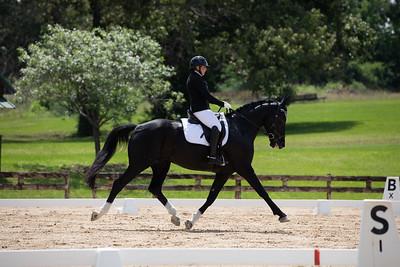 Horse 364